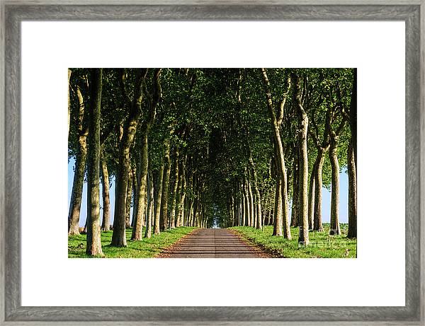 French Tree Lined Country Lane Framed Print