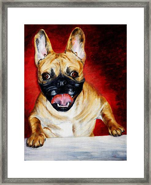 Frenchie With A Smile Framed Print by Karen Peterson