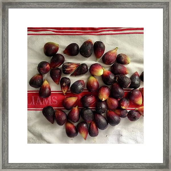 Fresh Figs Framed Print