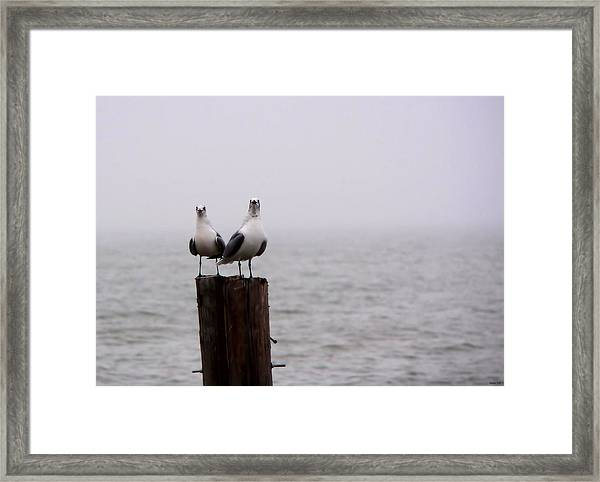 Friends In The Fog Framed Print