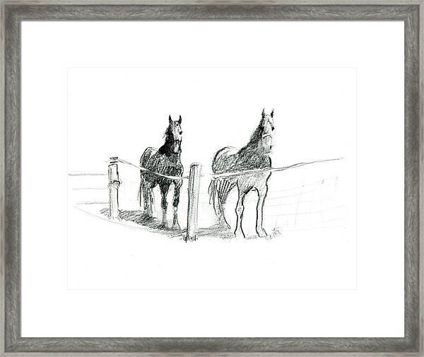 Friesian Horses Framed Print