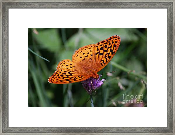 Fritillary Wings Framed Print