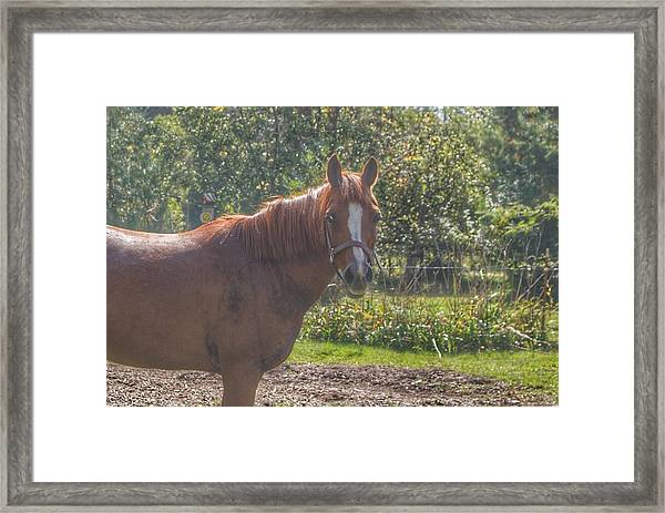 1010 - Froede Roads' Chestnut Brown Framed Print
