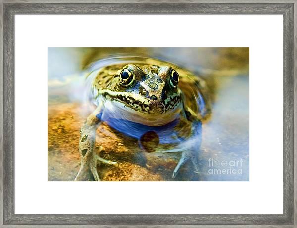 Frog In Pond Framed Print