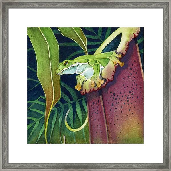Frog In Tropical Pitcher Framed Print