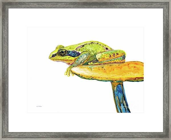 Frog Sitting On A Toad-stool Framed Print