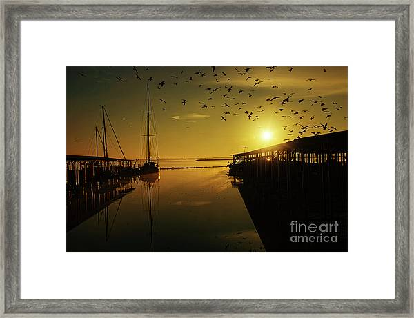 From Shadows Framed Print