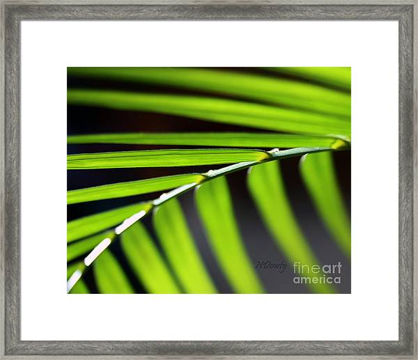 Frond Geometry Framed Print