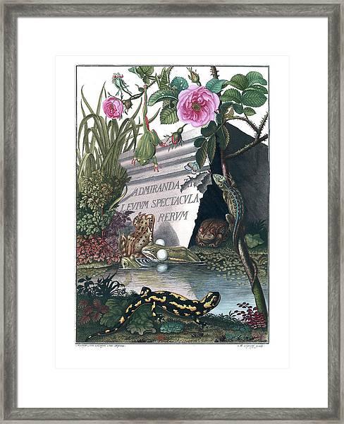 Framed Print featuring the drawing Frontis Of Historia Naturalis Ranarum Nostratium by ArtistAugust Johann Roesel von Rosenhof
