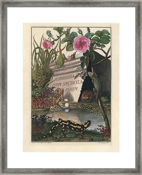 Framed Print featuring the drawing Frontis Of Historia Naturalis Ranarum Nostratium by August Johann Roesel von Rosenhof