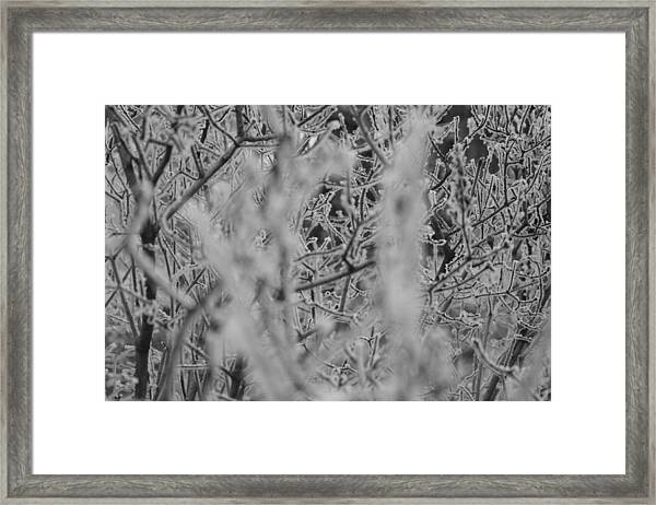 Framed Print featuring the photograph Frost 2 by Antonio Romero