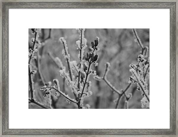 Framed Print featuring the photograph Frost 5 by Antonio Romero