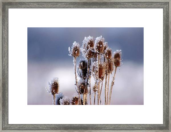 Frost In The Morning Framed Print