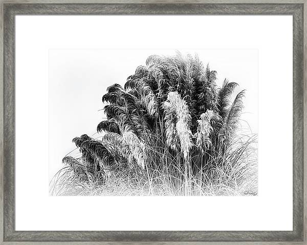 Framed Print featuring the photograph Frost On The Pampas Grass by Dee Browning