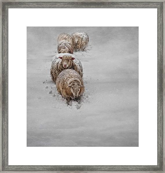 Frozen Fleece Framed Print