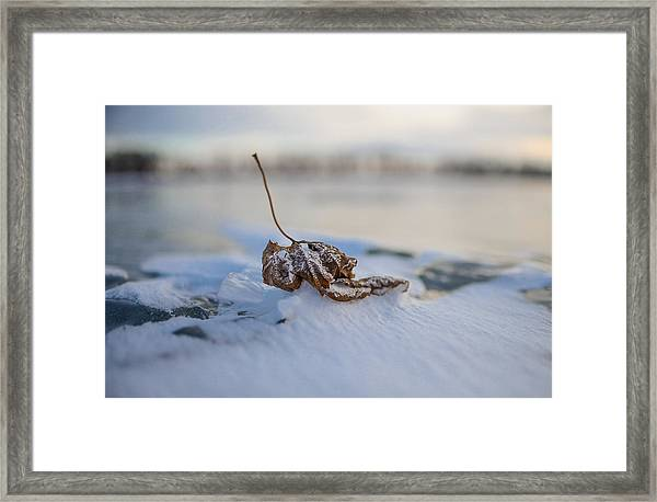 Frozen Leaf On Lake Reno Framed Print