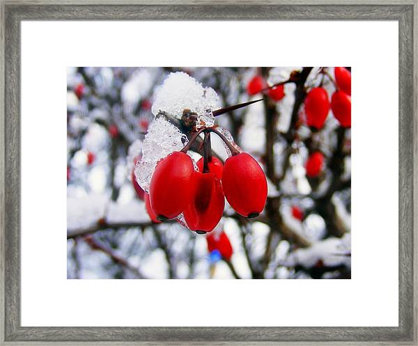 Frozen Red Berries Framed Print