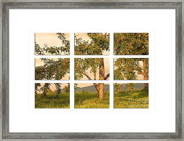 Fruit In The Orchard Through The Window Pane Framed Print
