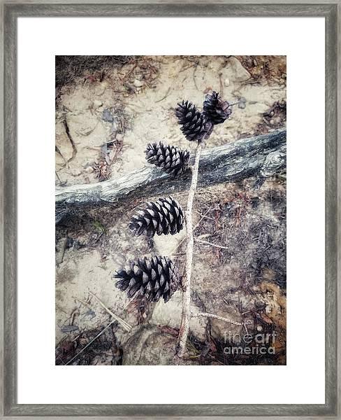 Fruit Of The Pine Framed Print