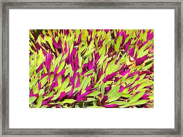 Fuchsia And Green -- Aloha Ground Cover Framed Print