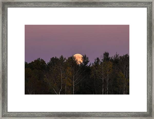 Full Moon Over Orchard Framed Print