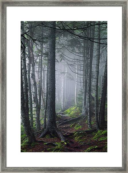 Fundy Fog Framed Print