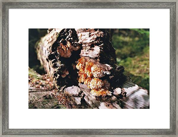 Fungus Is Beautiful Framed Print