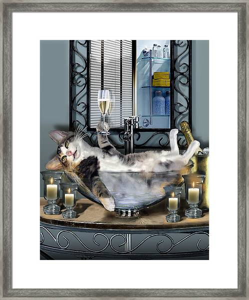 Funny Pet Print With A Tipsy Kitty  Framed Print