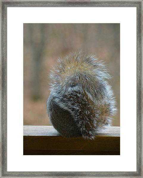 Fur Ball Framed Print