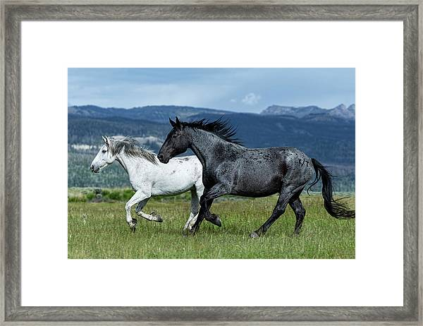 Galloping Through The Scenery Framed Print