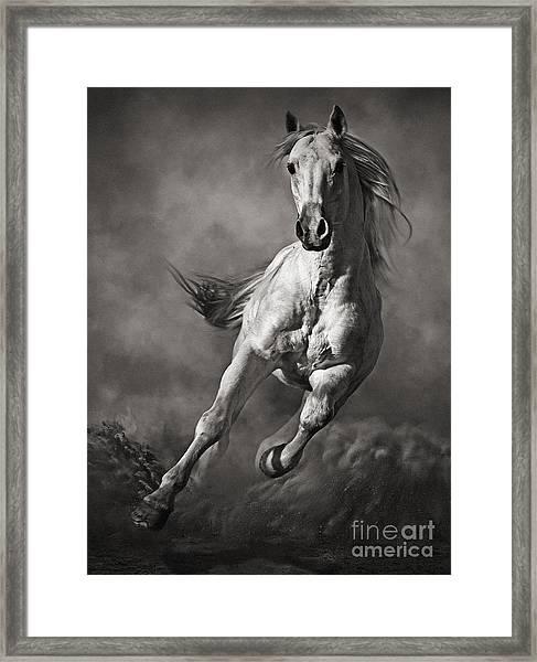 Galloping White Horse In Dust Framed Print