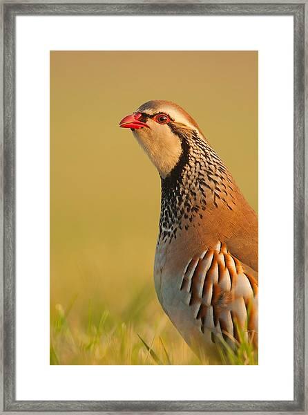 Game Bird Framed Print