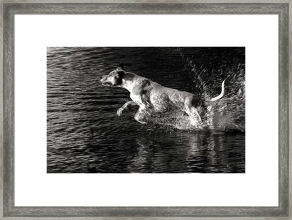 Games On The Water 2 Framed Print