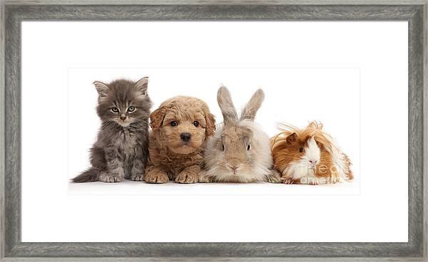 Gang Of Four Framed Print