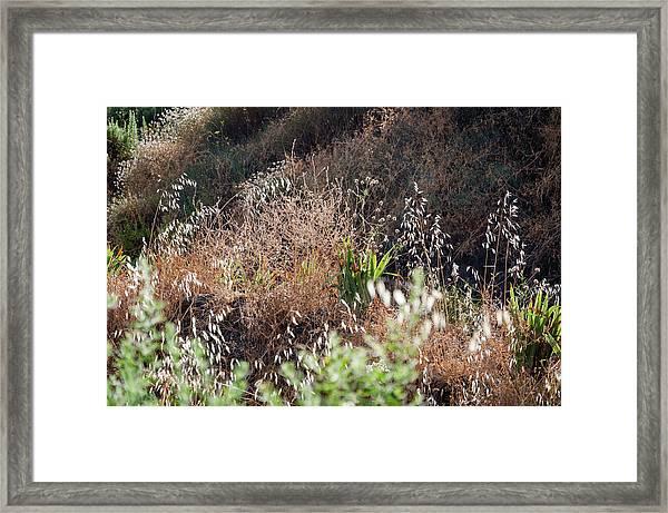 Garden Contre Jour Framed Print