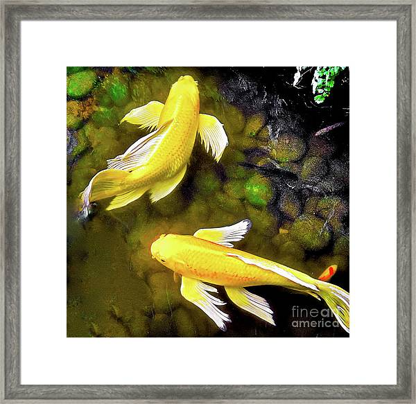 Garden Goldenfish Framed Print