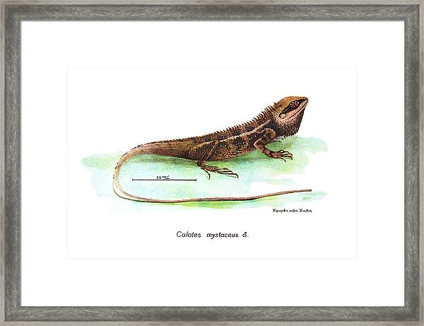 Framed Print featuring the drawing Garden Lizard by Nguyen van Xuan