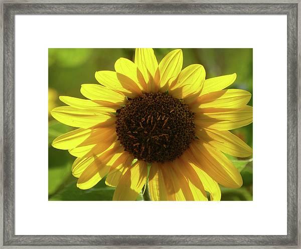 Garden Sunshine Framed Print