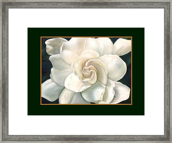 Gardenia Framed Print by Darlene Green