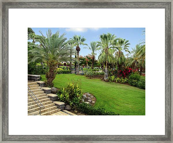 Gardens At Mount Of Beatitudes Israel Framed Print