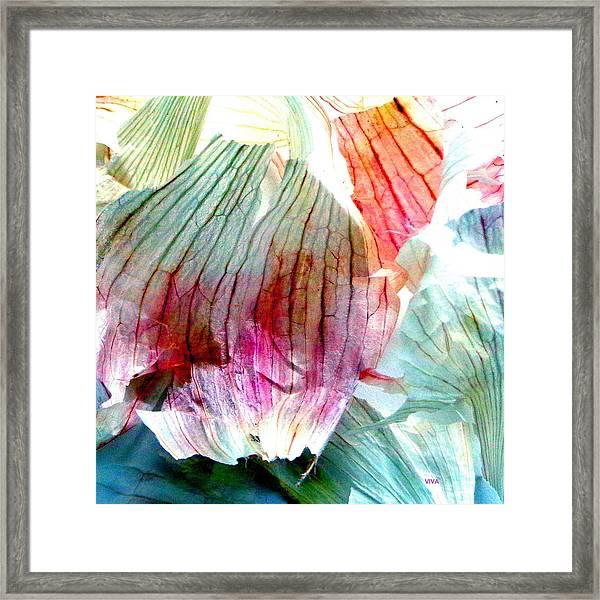Garlic  Abstract   Series Framed Print
