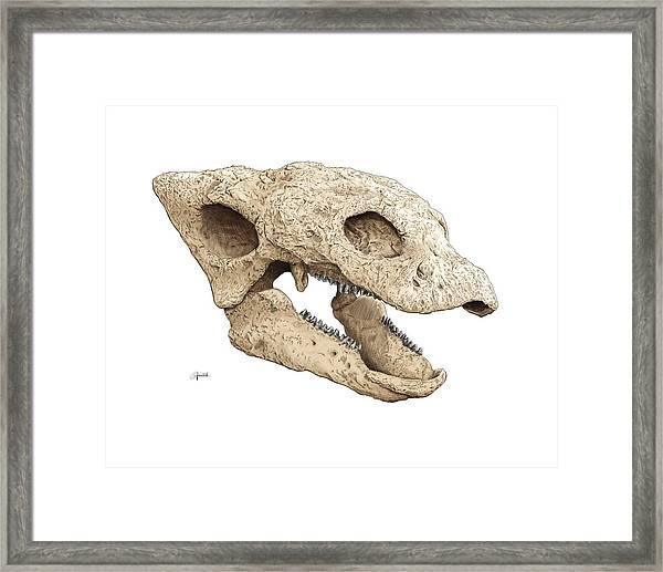 Gastonia Burgei Skull Framed Print