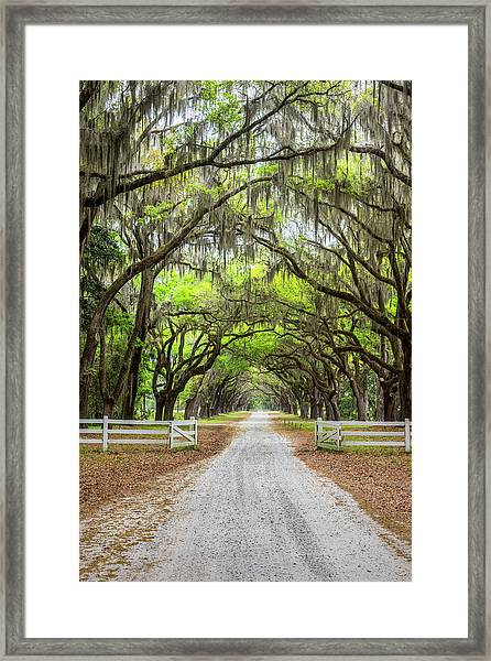 Gated Wormsloe Plantation Framed Print