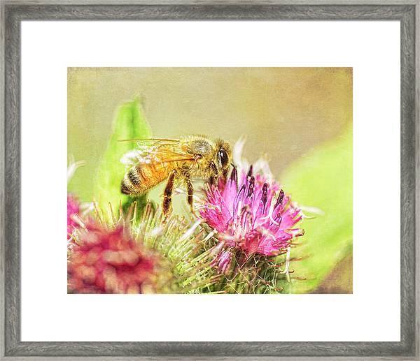 Gathering Pollen Framed Print