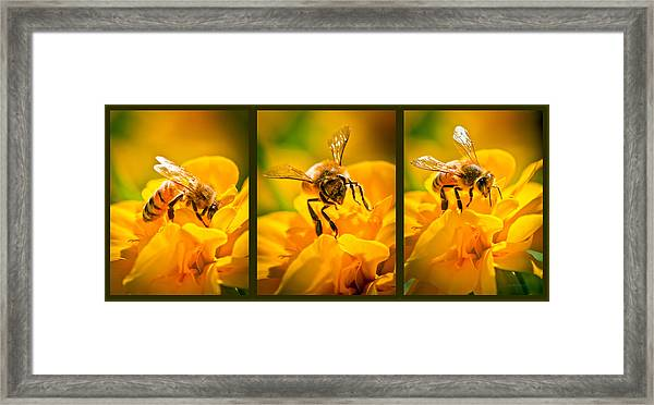 Gathering Pollen Triptych Framed Print