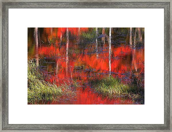 Gatineau Marsh Fall Colors Framed Print