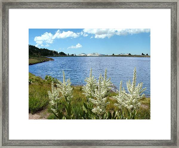 Gaylor Lakes And Queen Anns Lace Eastern Sierra Photo Framed Print