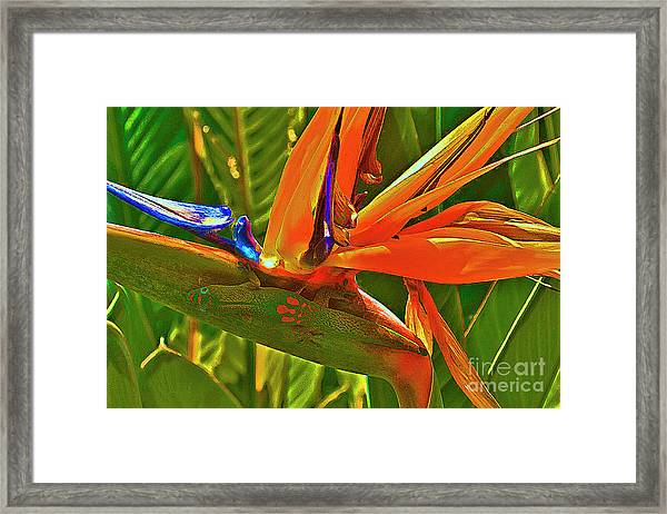 Gecko On Bird Of Paradise Framed Print