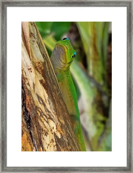 Gecko Up Close Framed Print