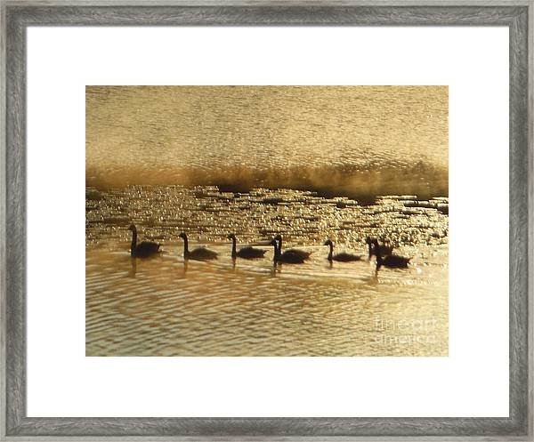 Geese On Golden Pond Framed Print